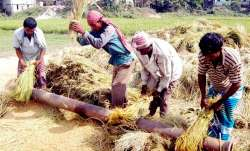 Representational pic - Record production of foodgrains in