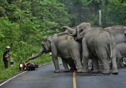 moped rider prays as angry elephants charge him watch video