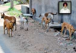 catch and send stray dogs to northeast says punjab congress