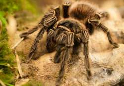 176 new species of animals discovered in india