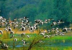 bhitarkanika national park draws more migrant birds this