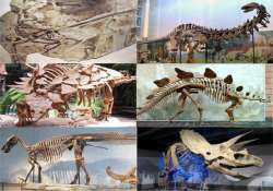 interesting facts to know about dinosaurs