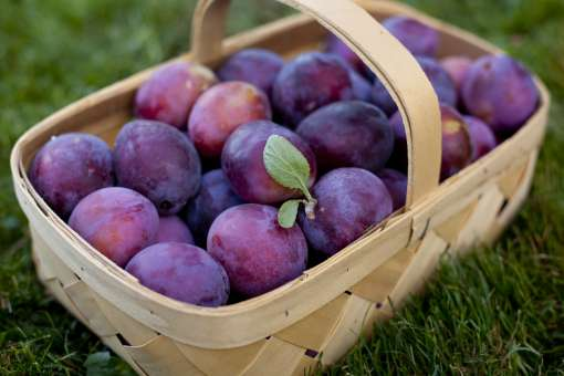 Plum: It is a seasonal fruit of the winters and has Vitamins B and E, along with minerals like magnesium, iron, calcium and zinc. These help to purify body and to maintain skin's elasticity. It hydrates the body.