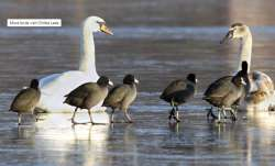 Preliminary report says thousands of birds died due to