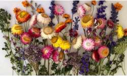 Vastu Tips: Keeping dry flowers cause Vastu defects at home. Know why