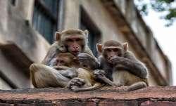 Amid corona outbreak, 15 monkey deaths create alarm in UP