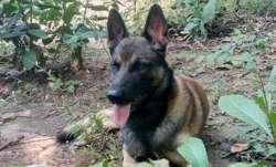 Dog foils IED blast in Chhattisgarh