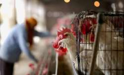 Pune: Poultry farmer approaches police as hens stop laying